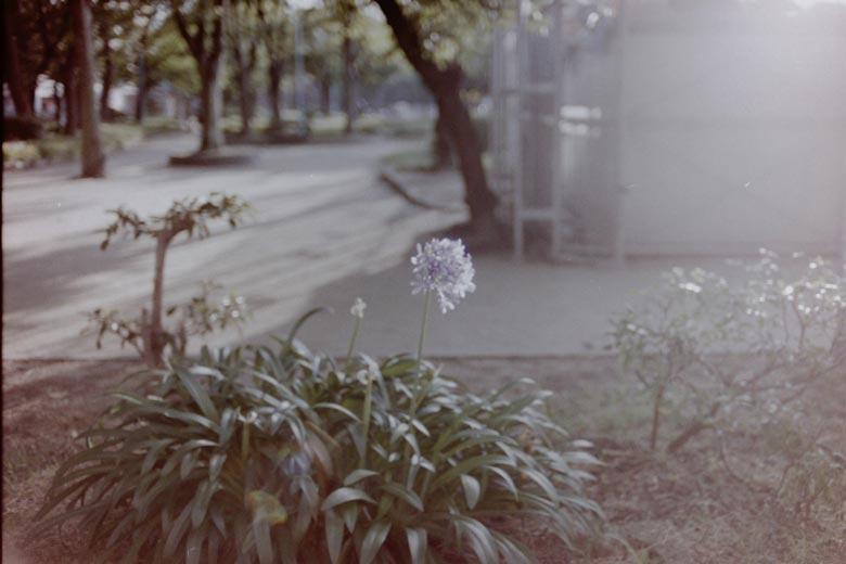 光に照らされる花