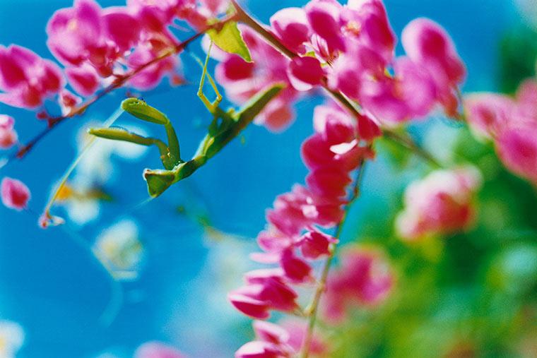 蜷川実花の撮った写真