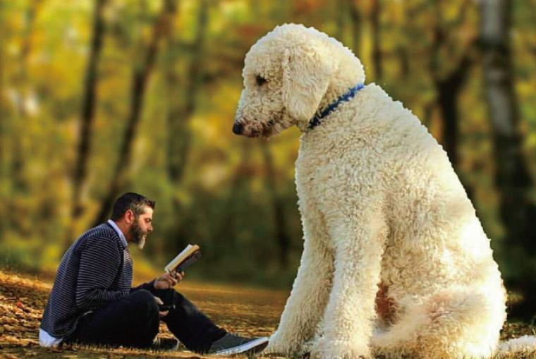 愛犬が大きくなった!?Instagramで話題のクリスさんと愛犬のファンタジーな世界。