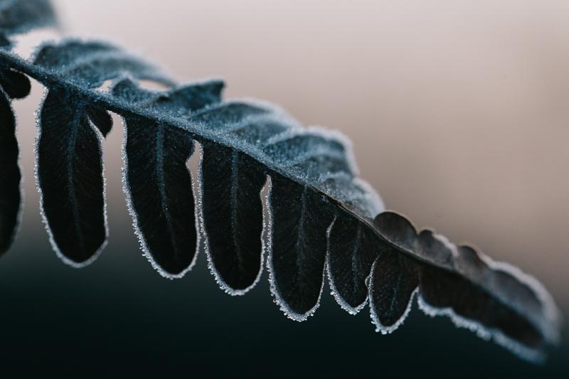 霜撮影で若草山へ!インスタ映え写真が撮れる『霜活』とは?
