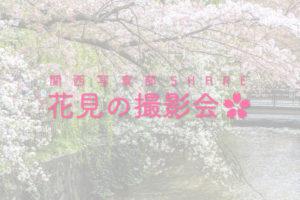 花見の撮影会
